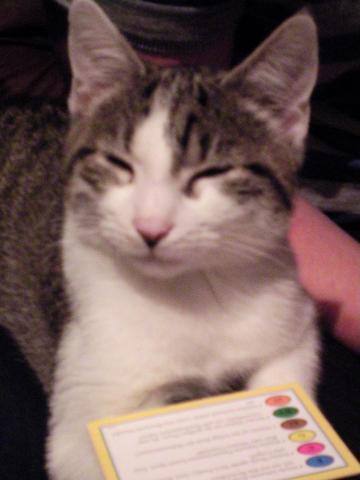 Mein Lieblingsbild von Addi - (Tiere, Krankheit, Katzen)
