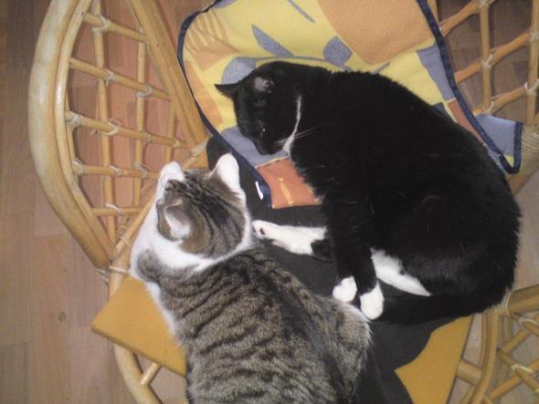 Meine Mau mau (5 Jahre) und Addi (6 Monate) - (Tiere, Krankheit, Katzen)