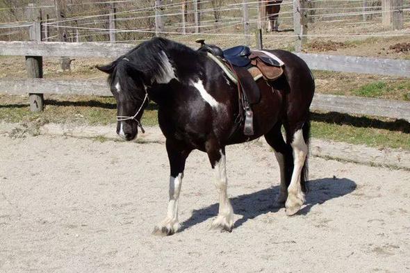 Farbvererbung in der Pferdezucht
