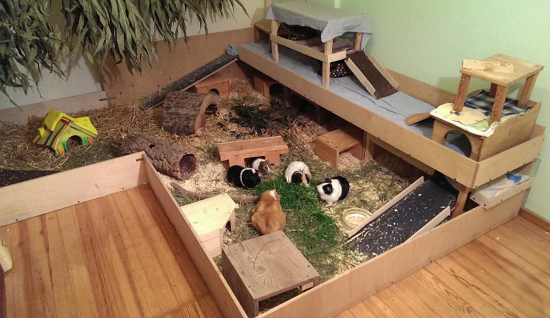 findet ihr das gehege f r 5 meerschweichen ausreichend bild meerschweinchen. Black Bedroom Furniture Sets. Home Design Ideas