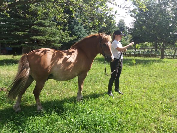 - (Pferde, Rücken)