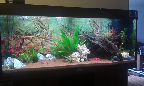 fischbesatz zu hoch fische aquarium juwelen. Black Bedroom Furniture Sets. Home Design Ideas