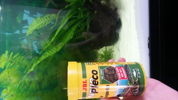 fische fressen die futtertabletten nicht aquarium futter welse. Black Bedroom Furniture Sets. Home Design Ideas
