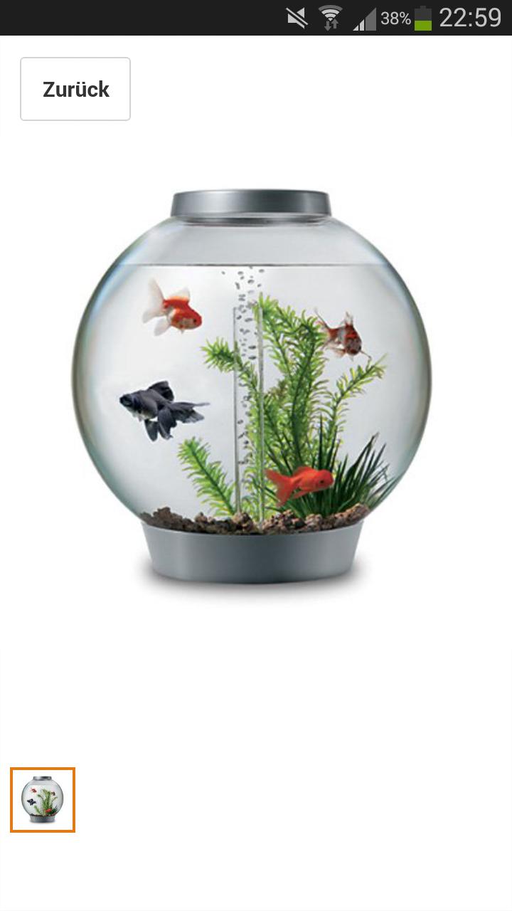 fische im kugelglas aquarium. Black Bedroom Furniture Sets. Home Design Ideas