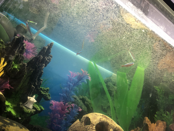 Fische sterben - warum?