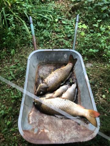 Fischsterben im Angelteich?