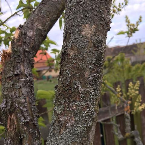 1 bild - (Garten, Baum)