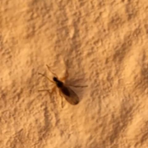 fliegen im haar insekten parasiten. Black Bedroom Furniture Sets. Home Design Ideas