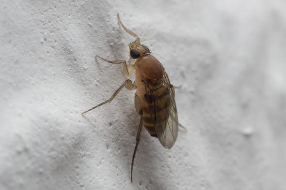 fliegen in der wohnung plage insekten sch dlinge. Black Bedroom Furniture Sets. Home Design Ideas
