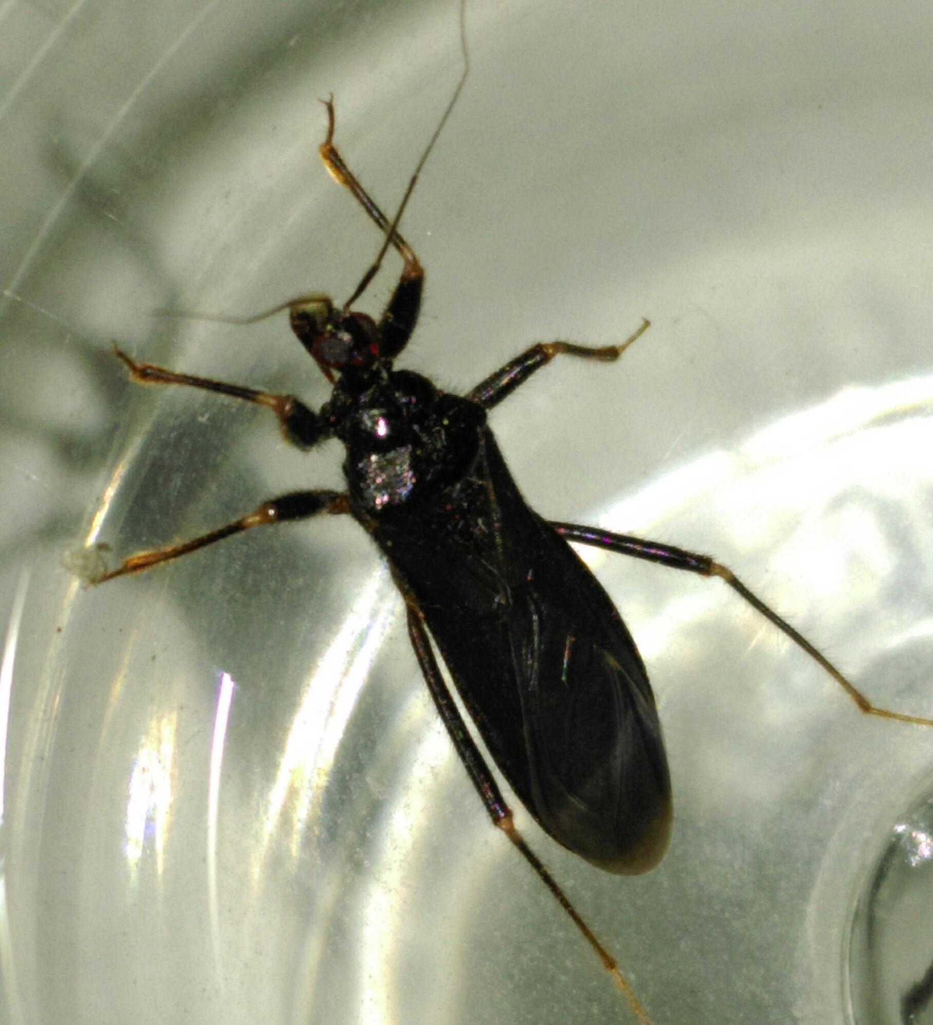 fliegender k fer um welche art handelt es sich hier tiere natur insekten. Black Bedroom Furniture Sets. Home Design Ideas