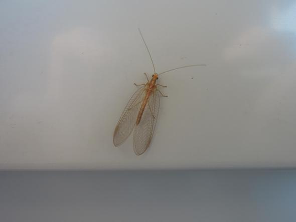 Bild1 - (fliegen, Büro, Mücken)