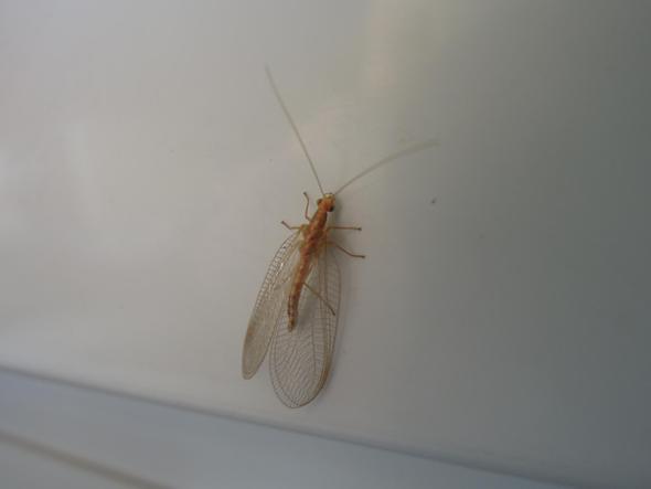 Bild2 - (fliegen, Büro, Mücken)