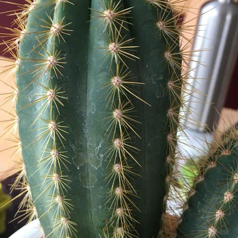 ????? - (Gärtner, kaktus)