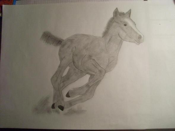 fohlenzeichnung pferde zeichnen malen. Black Bedroom Furniture Sets. Home Design Ideas