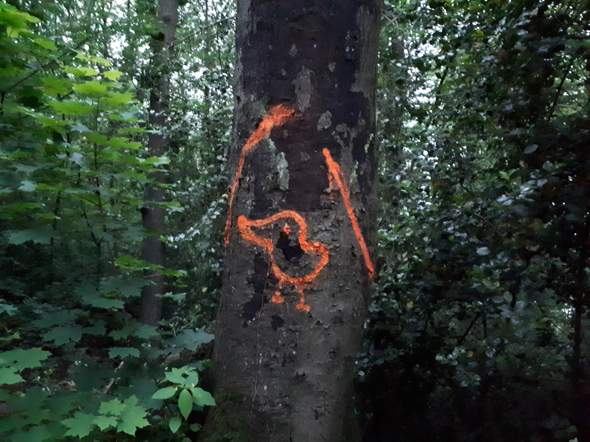 Forstwirtschaftliches Symbol oder nur Kritzelei?