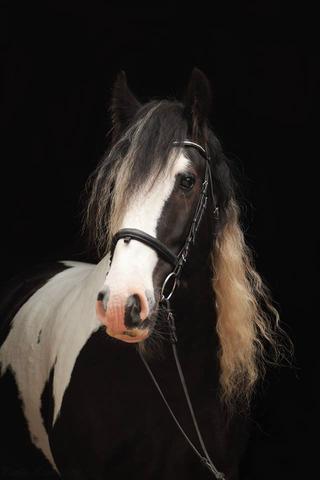 fotografie wie bekommt man den schwarzen hintergrund hin pferde pferdefotografie. Black Bedroom Furniture Sets. Home Design Ideas