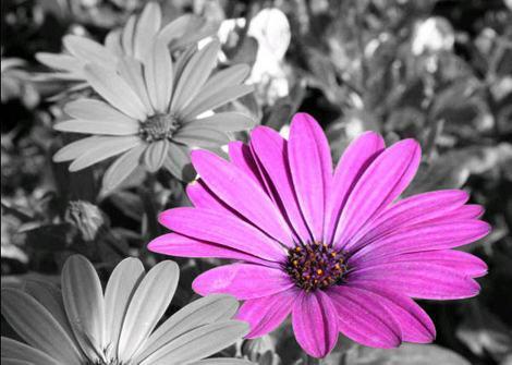 Blume schwarz-weiß-bunt - (Programm, Farbe, Fotografie)
