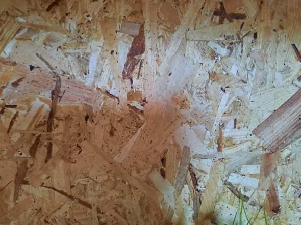 Fotorückwand Holzterrarium?