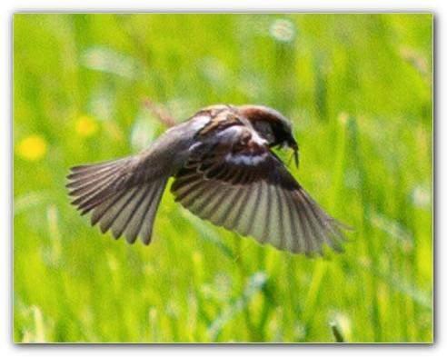 Fotoschnappschuss: doch welcher Vogel?