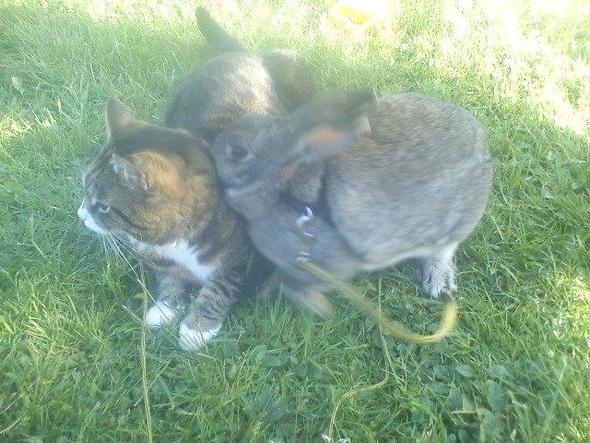 das - (Katze, Haustiere, Katzen)