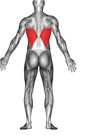 Rueckenmuskel - (Körper, Fitness, Training)