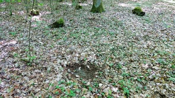 Freiflächen im Wald: Wer hat sie angelegt?