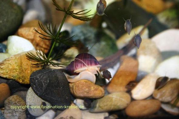 Schnecke2 - (essen, Pflanzen, Pflege)