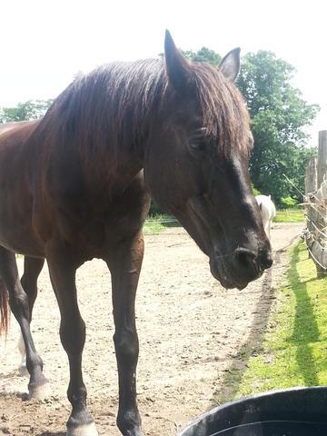 Frisuren Für Lange Mähnen Pferde Frisur