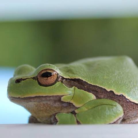 Frosch am Pool? Was tun?