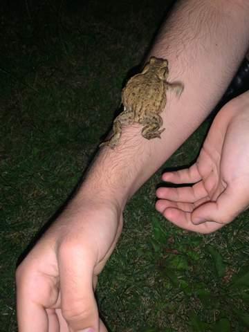 Frosch im Garten wohin mit ihm?