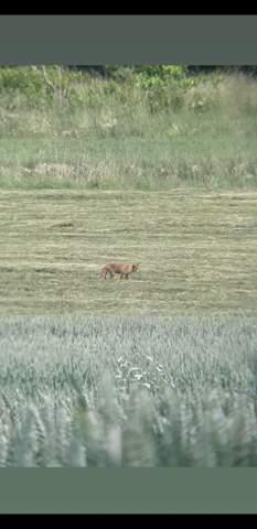 Fuchs im Garten der keine Angstvor Menschen hat?