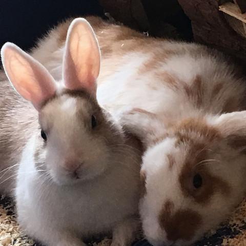 Coco Chanel und Tiffany  - (Kaninchen, wohnen, Wohlfühlen)