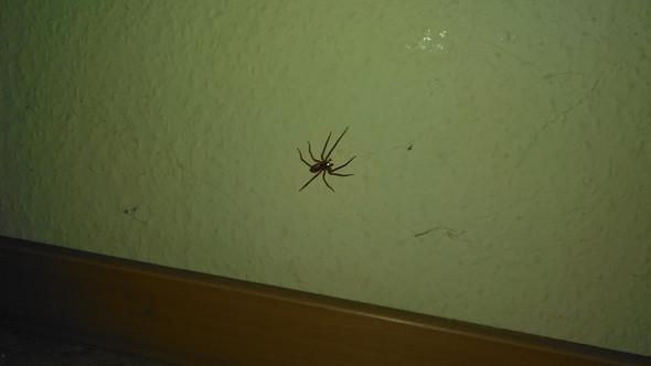 Bild 1 - (Tiere, Spinnen, Spinne)