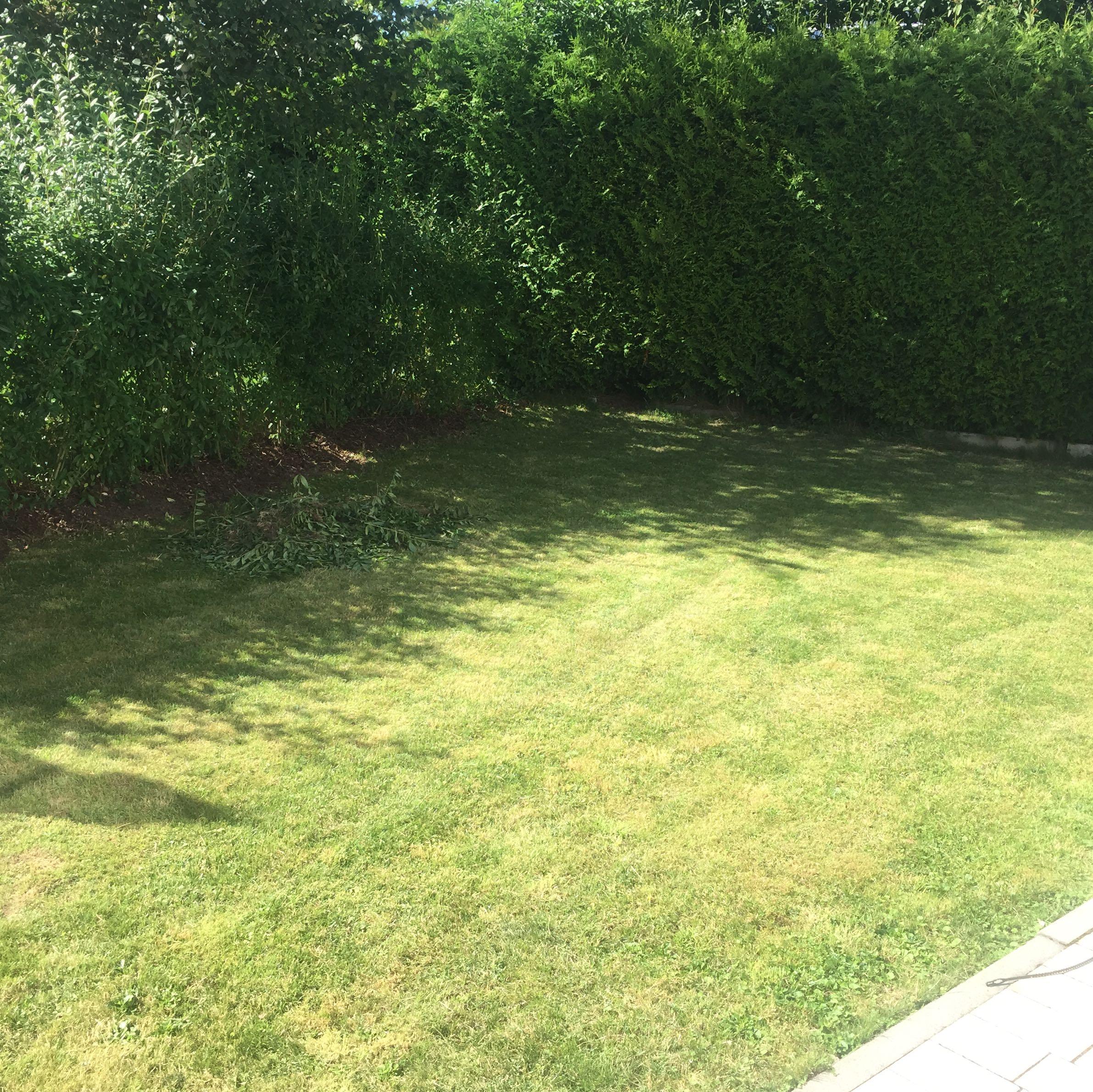 garten gestalten teich oder terrasse haus wasser pflanzen. Black Bedroom Furniture Sets. Home Design Ideas