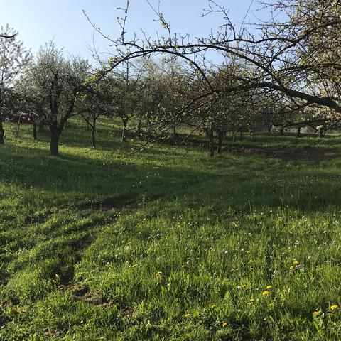 Gartengrundstück Abseits Begradigen Ohne Genehmigung Garten Wiese