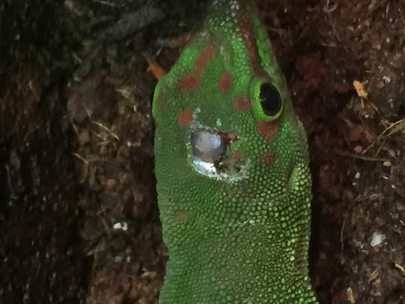 Nochmal anders  - (Natur, Gecko, Madagaskar)