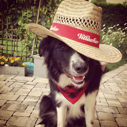 Border Collie Aron - (Hund, Welpen, Gefrierschrank)