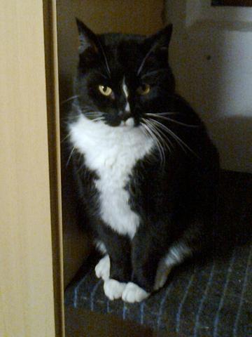 Spencer - (Tiere, Katze, Katzen)