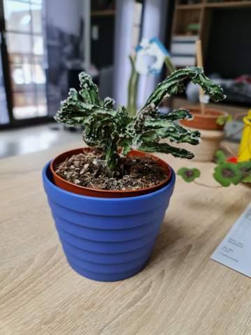 Geht es meinem Kaktus gut?