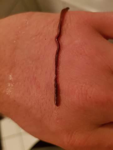 Geht es meinem Wurm nicht gut?