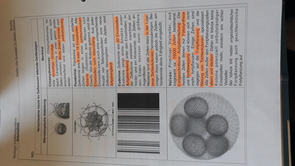 - (Schule, Biologie, Zellen)
