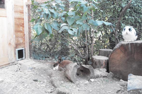 Teil des Außengeheges (Liebingsplatz & Problemplatz der beiden) - (Kaninchen, lesen)