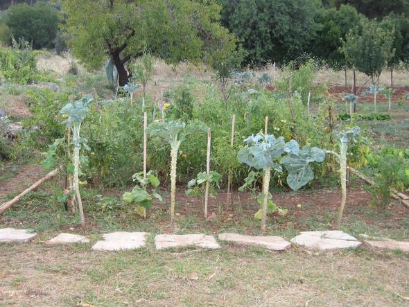 Unbekanntes Gemüse - (Lebensmittel, Gemüse)