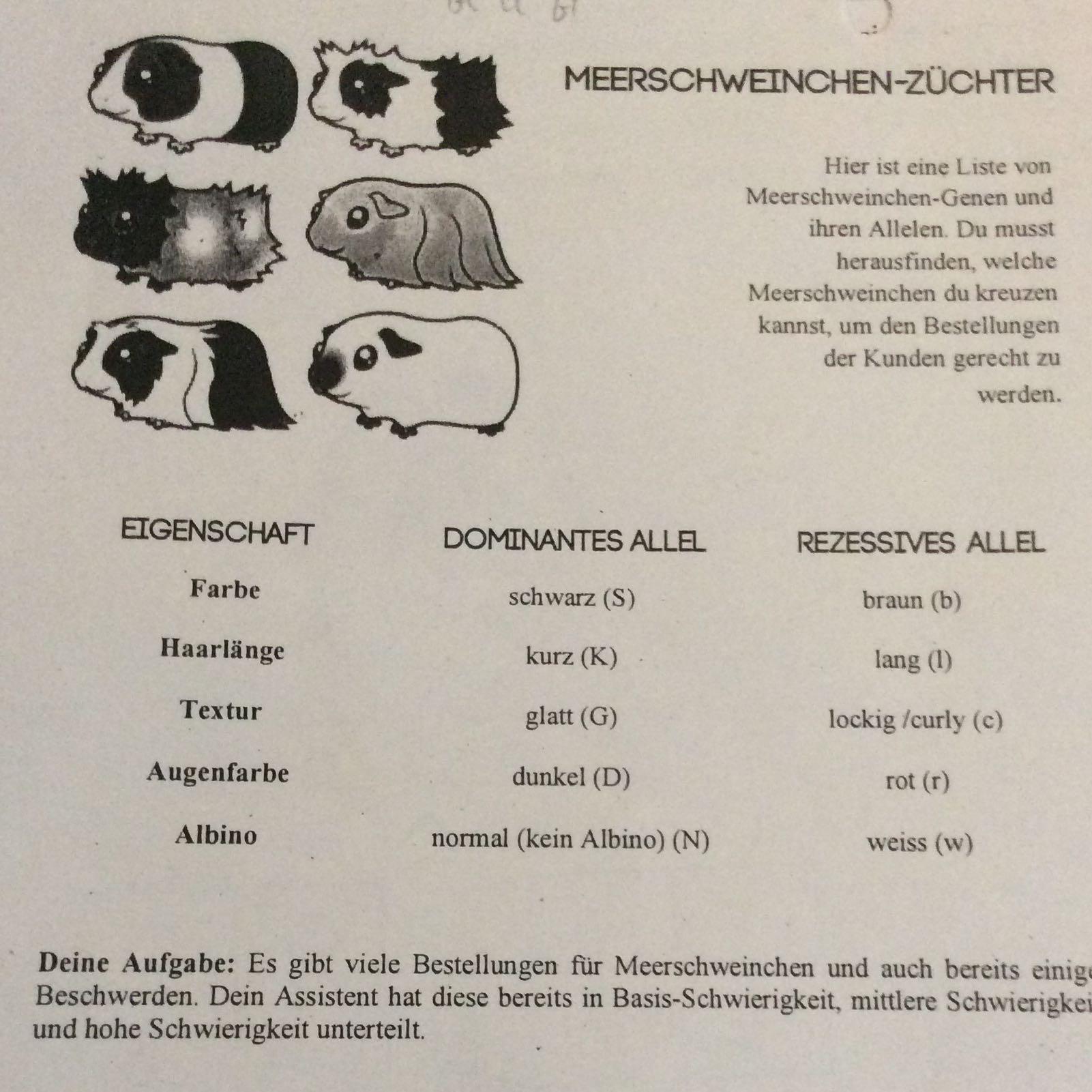 Charmant Dihybrid Quer Arbeitsblatt Meerschweinchen Beantworten ...