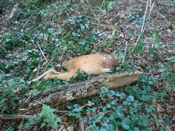 - (Tiere, Jagd, Riss)