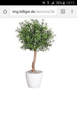 Diese Pflanze  (baum)  - (Pflanzen, Abschied)