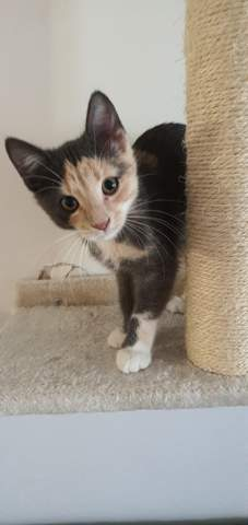 Geschenkte Katze zurückverlangen?