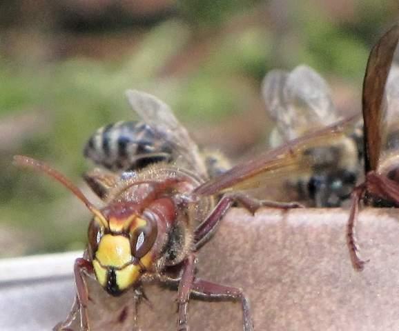 """Gibt es bei Insekten einen """"rote Augen Effekt""""?"""
