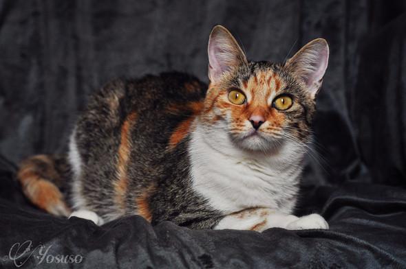 Susi - (Katze, Haustiere)