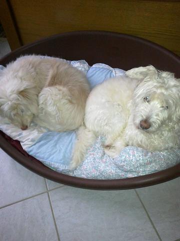 Betty und Rosa - (Hund, Rasen)